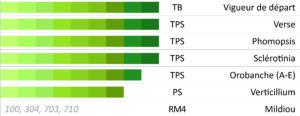 DURBAN CS tournesol linoléique précoce - profil agronomique